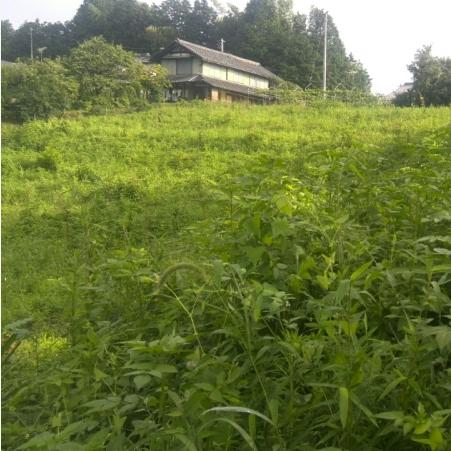 草に埋もれた圃場